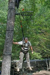 tree-safety-image